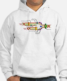 DNA Synthesis Hoodie