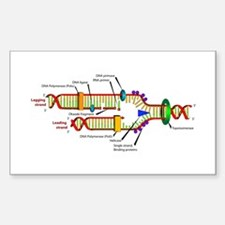 DNA Synthesis Rectangle Decal