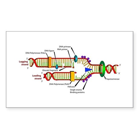 DNA Synthesis Rectangle Sticker