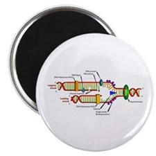 """DNA Synthesis 2.25"""" Magnet (10 pack)"""