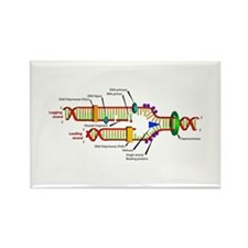 DNA Synthesis Rectangle Magnet (10 pack)