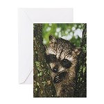 Baby Raccoon Greeting Card