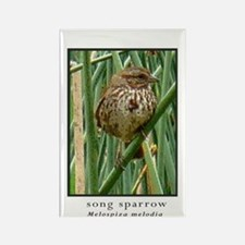 Song sparrow in tules Rectangle Magnet