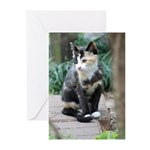 Feral Cat Colony Greeting Cards (Pk of 10)