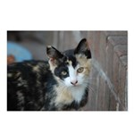 Feral Cat Colony Postcards (Package of 8)