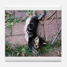 Feral Cat Colony Tile Coaster