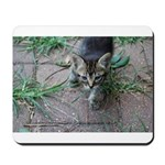 Feral Cat Colony Mousepad