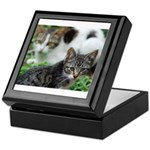 Feral Cat Colony Keepsake Box
