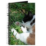 Feral Cat Colony Journal