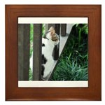 Feral Cat Colony Framed Tile