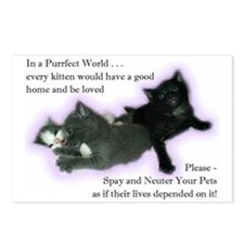 Spay Neuter Kittens Postcards (Package of 8)