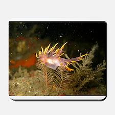 Firey Nudibranch Mousepad