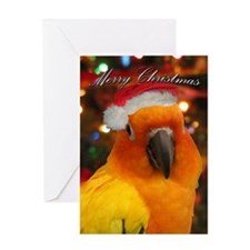 Santa Hat Sun Conure Christmas Card