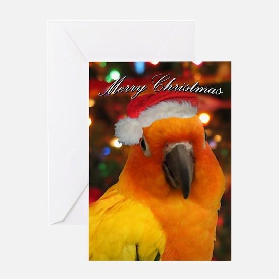 Santa Hat Sun Conure Christmas Card