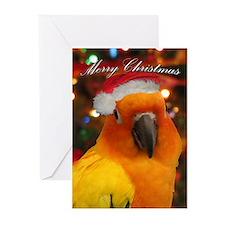 Santa Hat Sun Conure Christmas Cards (20 pk)