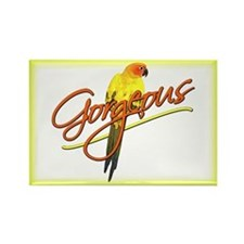 Gorgeous Sun Conure Rectangle Magnet