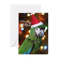 Severe Macaw Single Christmas Card