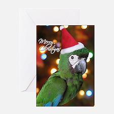 Severe Macaw Single Christmas Card
