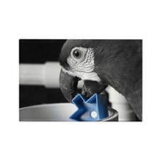 blue Severe Macaw Rectangle Magnet
