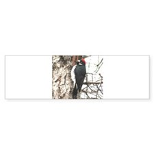Calif. Redhead Woodpecker Bumper Bumper Sticker