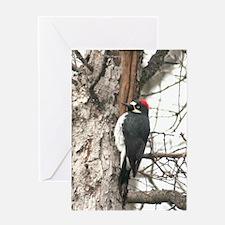 Calif. Redhead Woodpecker Greeting Card