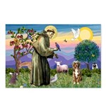 St Francis/Aussie (#5) Postcards (Package of 8)