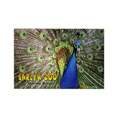 Peacock Rectangle Magnet (100 pack)