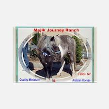 Mini Horse Rectangle Magnet (100 pack)