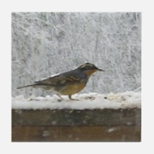 Thrush in Snow Bird Lover Tile Coaster
