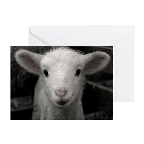 White Lamb Greeting Cards (Pk of 10)