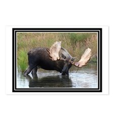 Big Boy Moose Postcards (Package of 8)