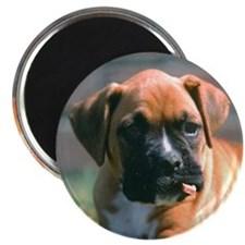 Boxer Pup with Stick Magnet