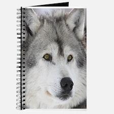 The Watcher Journal