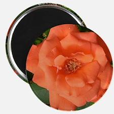 Tropicana Round Magnet