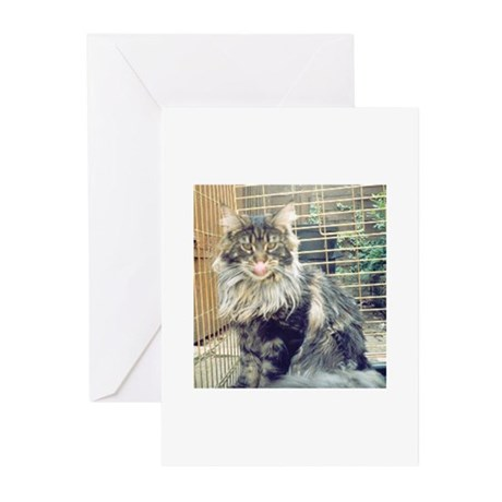 'WildThing' Tobias_MaineCoon Greeting Cards (Packa