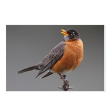 Red Robin Postcards (Package of 8)