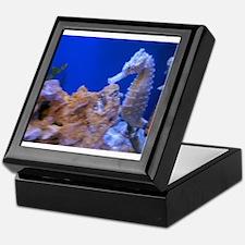 Unique Seahorse Keepsake Box