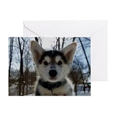 Siberian Husky Puppy Greeting Card
