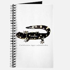 Tiger salamander 1 Journal