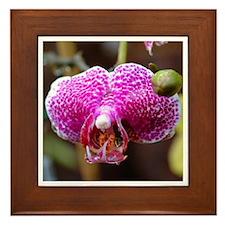 Wild Orchid Framed Tile