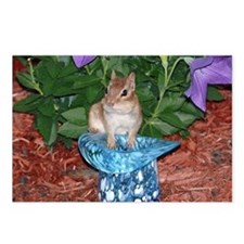 Chester the chipmunk Postcards (Package of 8)