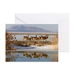Cluster Greeting Cards (Pk of 20)