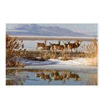 Cluster Postcards (Package of 8)
