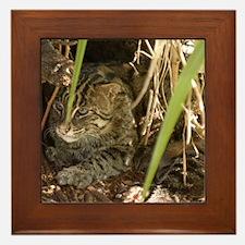 Fishing Cat Framed Tile