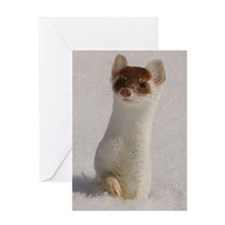 Ermine Greeting Card