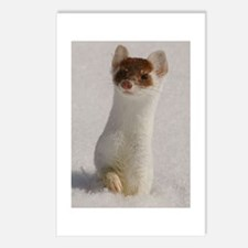 Ermine Postcards (Package of 8)