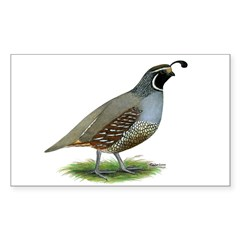 California Valley Quail Rectangle Decal