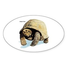 Galapagos Tortoise Oval Decal