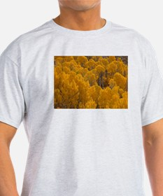 Autumn Aspen T-Shirt