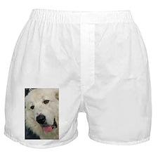Great Pyranees Boxer Shorts
